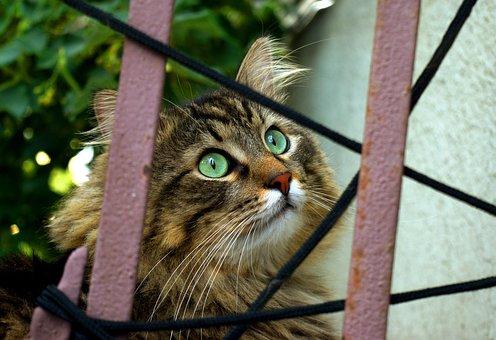 Cat, Behind Fence, Curious, Pet, Animal, Outdoor, Fur