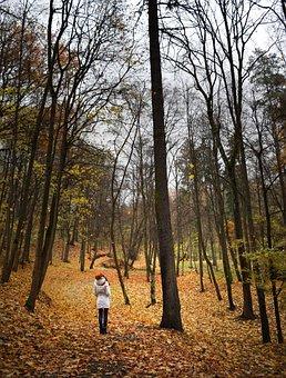 Autumn, Girl, Trees, Forest, Walking, Strolling, Park