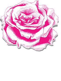 Rose, Flower, Pink, Floral, Element, Embellishment