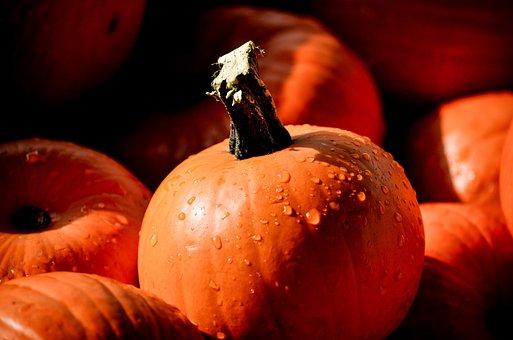 Pumpkin, Mini Pumpkin, Shadows, Water Drops, Fall