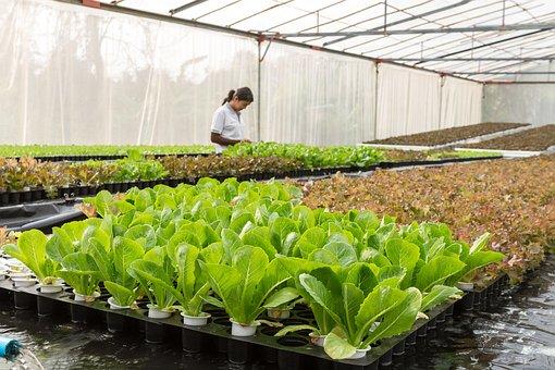 Conservatory, Agriculture, Aquaculture, Cultivate