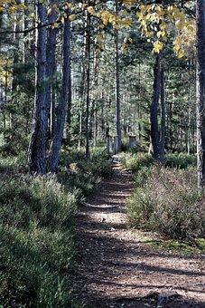 Trees, Sheet, Foliage, Autumn, Branch, Nature, Green