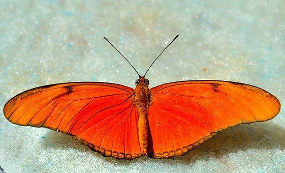 Butterfly, Orange, Bright, Macro, Wings, Spread
