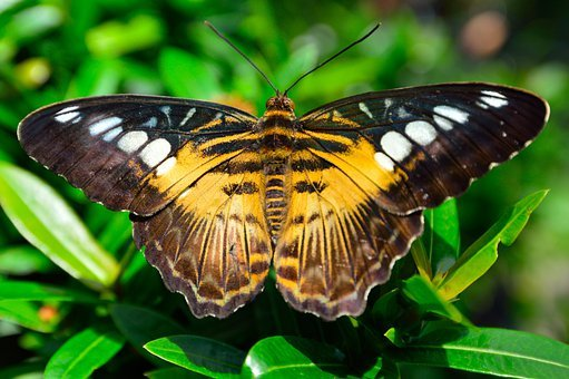 Butterfly, Wings, Spots, Pattern, Yellow, Brown, Insect