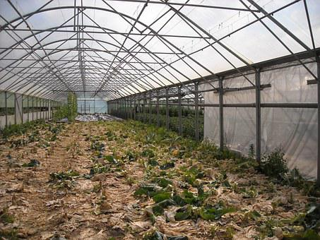 Agriculture, Greenhouse, Conservatory, Growing