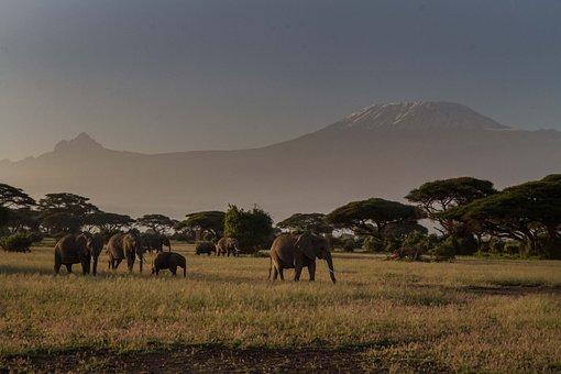 Africa, African Bush Elephant, Big Five, Elephant