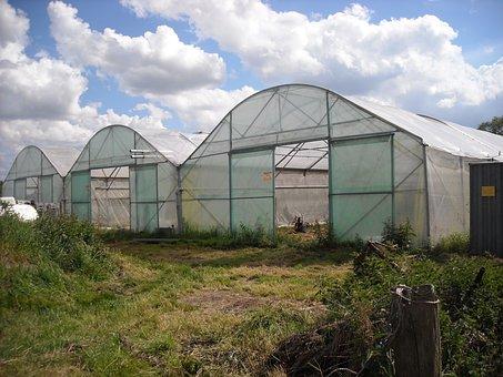 Agriculture, Gardening, Vegetables, Garden