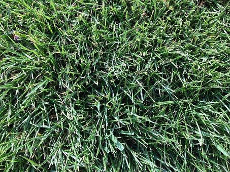 Grass, Field, Football, Lawn, Green, Nature, Natural