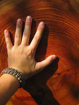 Wood, Hand, Grain, Annual Rings, Finger, Nature