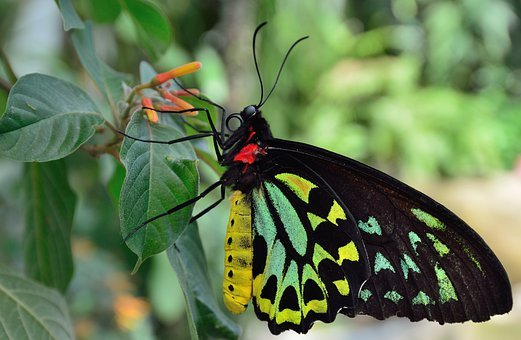 Butterfly, Macro, Close Up, Black, Colorful, Legs