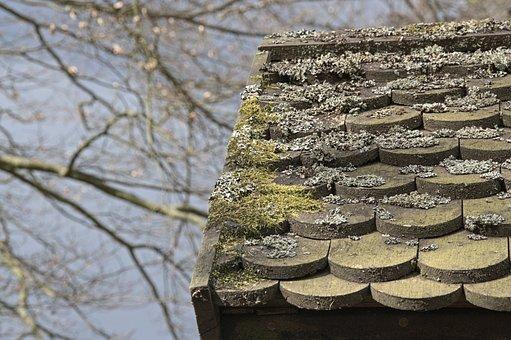 Autumn, Roof, Moss, Shingle, Hut, Wood Shingle