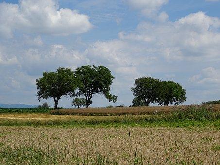 Landscape, Tree, Nature, Sky, Beautiful, Cereals, Field