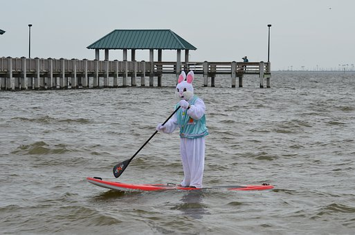 Easter, Paddle Board, Adventure, Mammal, Bunny, Water