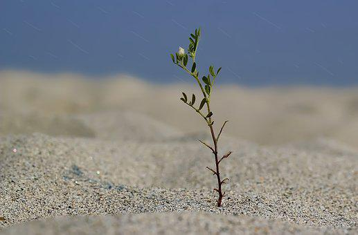 Alone, Plant, Tree, Tree Plantation, Landscape, Green