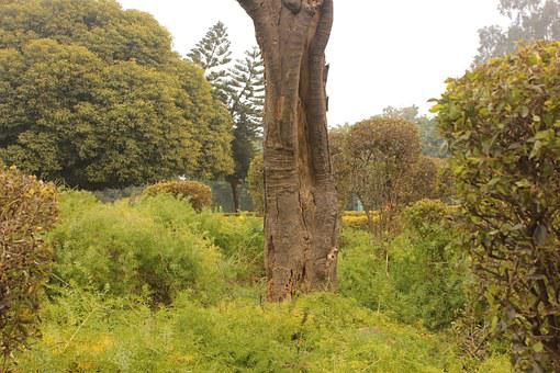 Tree, Garden, Park, Chandigarh, Rose, Sector, 17