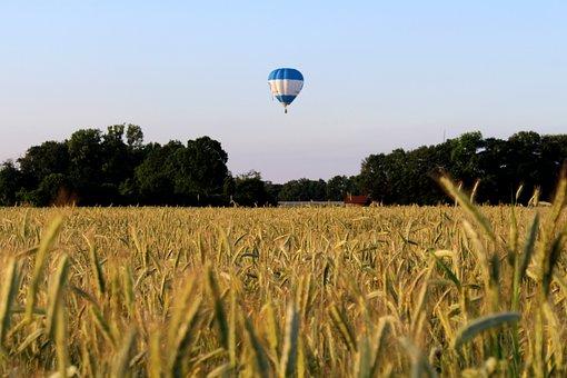 Hot Air Balloon, Rye, Cereals, Nature, Grain, Ear