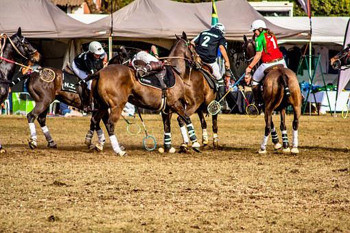Sport, Polo Cross, Horse, Polo, Animal, Competition