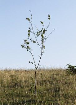 Young Tree, Branches, Lean, Only, Prairie, Drôme