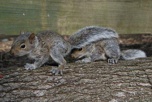 Squirrel, Hiding Squirrel, Cute, Animal, Nature, Brown