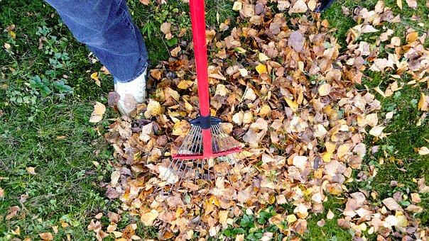 Raking, Fall, Autumn, Rake, Leaf, Garden, Season