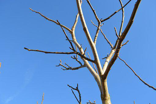 Bare Tree, Winter, Blue Sky, Aesthetic, Branches