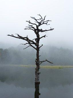 Lake, Dead Tree, Reflection, Symbolism, Sadness, Dream