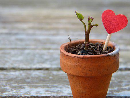 Flowerpot, Engine, Heart, Earth, Grow, Plant, Maintain