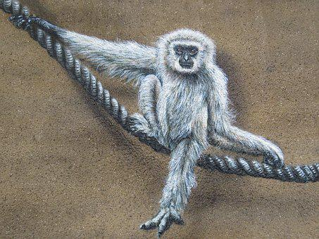 Monkey, Wall Art, Wall, Zoo, Berlin, Lichtenberg