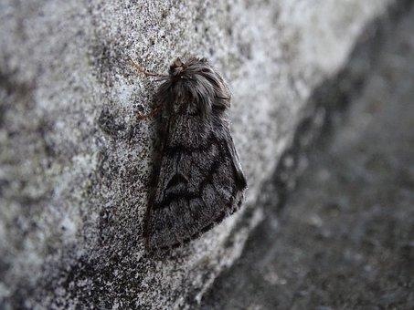 Camouflage, Moth, Winter, Unnoticed