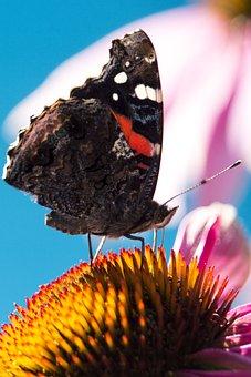 Nature, Papilion, Macro