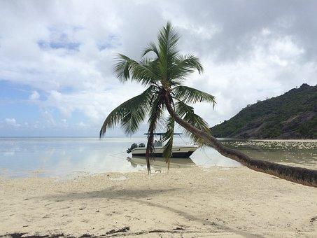 Seychelles, Holiday, Palm Trees, Beach, Palm, Ebb