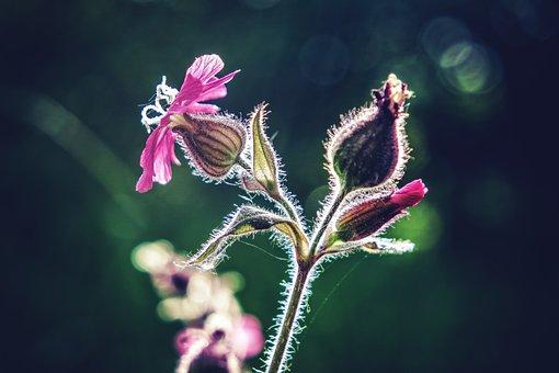 Flower, Macro, Flower Macro, Macro Photography, Plant