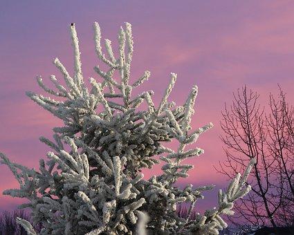 Tree, Frost, Winter, Nature, Sky, Purple, Landscape