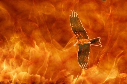 Kite On Fire, Raptor, Flames, Bird, Firebird