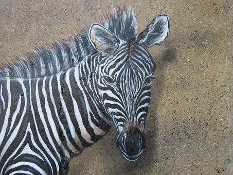 Zebra, Wall Art, Wall, Zoo, Berlin, Lichtenberg