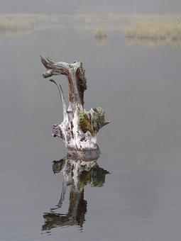 Water, Fog, Dead Tree, Dream, Pond, Trunk, Melancholy