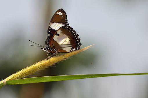 Butterfly, Wildlife, Nature, Insect, Animal, Wing