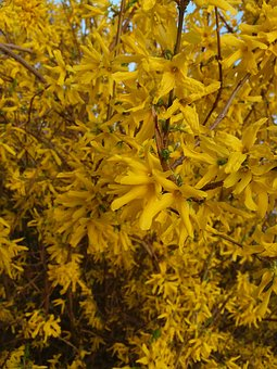 Kvity, Nature, Yellow, Spring