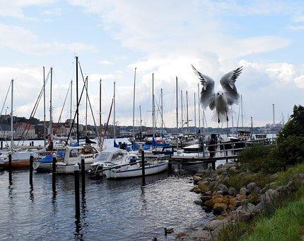 Seagull, Flight, Port, Sailing Boats, Bird, In Flight