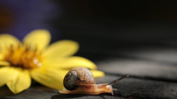 Snail, Va-jay-jay, Flower, Blossom, Bloom, Nature