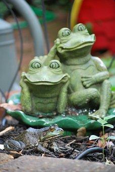 Frog, Frogs, Green, Amphibian, Nature, Croak, Ecology
