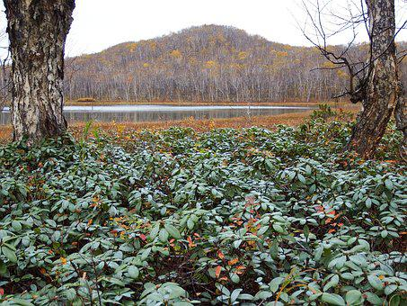 Forest, Lake, Tundra, Autumn, Rhododendrons, Greens