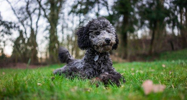 Pet, Animal, Funny, Cute, Happy, Fun, Puppy, Outdoor