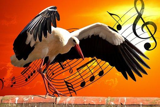 Stork, Bird, Music, Dance, Dance Steps, Funny, Cute