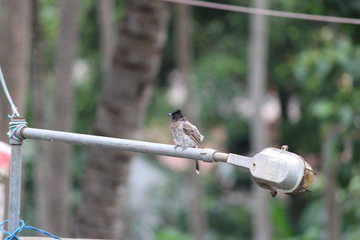 Sparrow, Garden, Tube Light