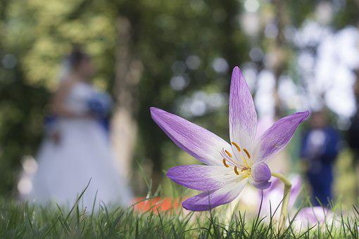 Flowers, Gorky Park, Kharkov