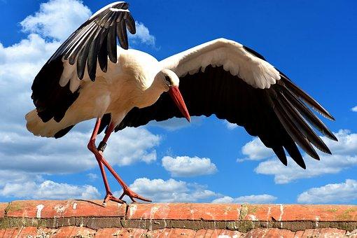 Stork, Bird, Roof, Sky, Clouds, Blue, Fly, Plumage
