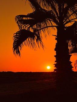 Palm Tree, Sun, Sunset, Summer, Nature, Sunlight
