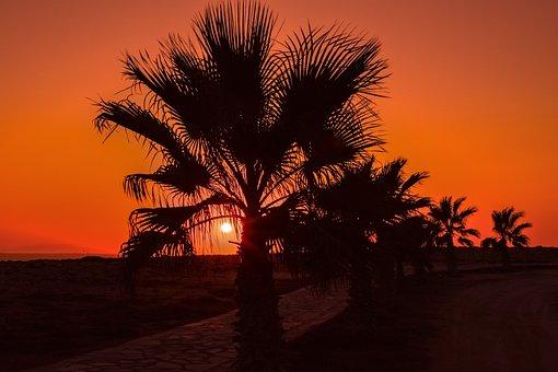 Palm Trees, Path, Sun, Sunset, Summer, Nature, Sunlight