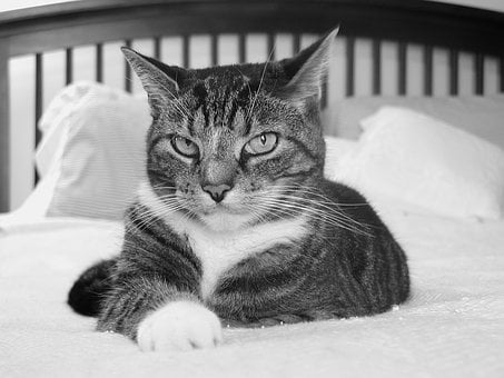 Cat, Cat In Bed, Bed, Cute, Pet, Animal, Domestic, Home